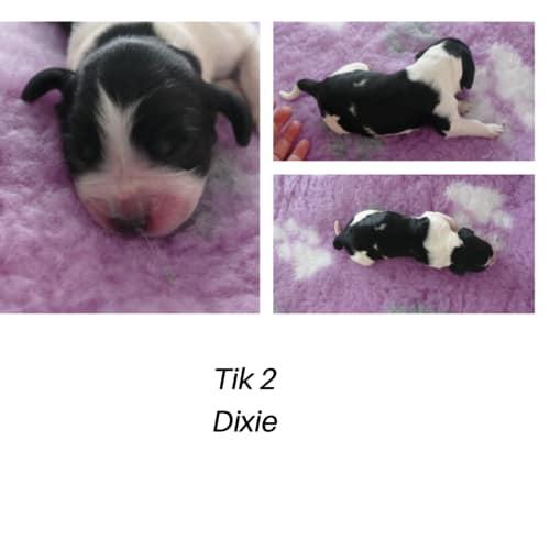 TIK2.Dixie