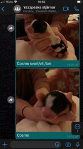 Cosmo 1 dag