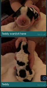 Teddy ,1 dag
