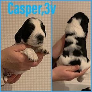 Casper 3v