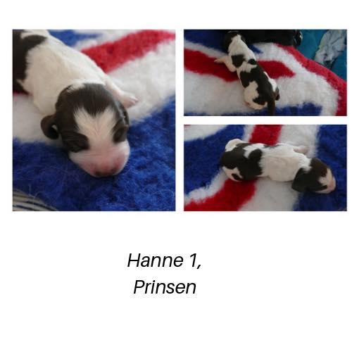 Hanne1.Prinsen