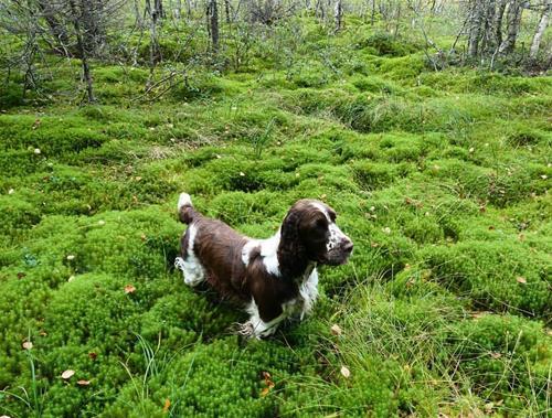 Yazzie i skogen