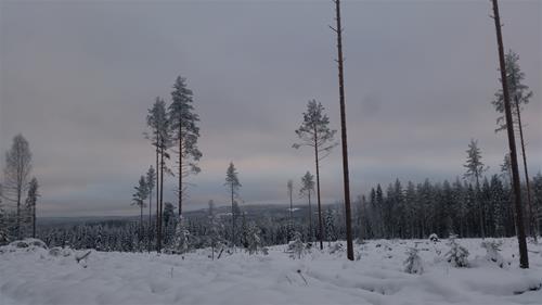 Höst_vinter_2016 263