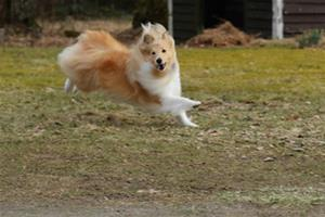 Daisy i full fart