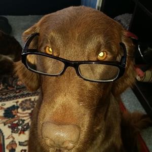 posse i glasögon