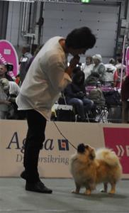 Klassevinner Ung Hund på Euro Dog Show 04.09.15
