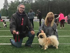 Norsk Utstillings Champion på Storås 26.05.18