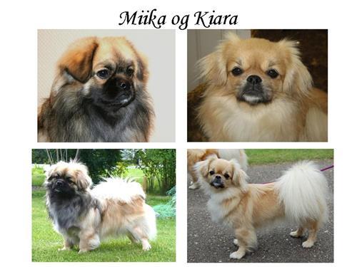 Miika og Kiara – Kopi
