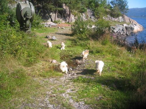 kvalvikfort august 2009 025 - Kopi