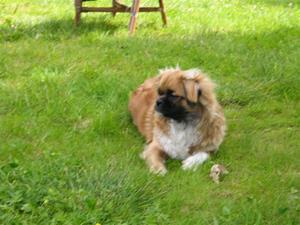 Tibber i hagen 094 – Kopi