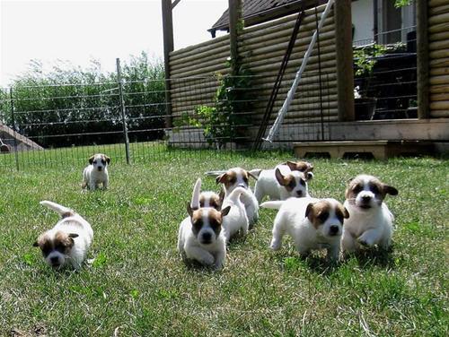 Pups running