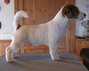 Elvis 4,5 month