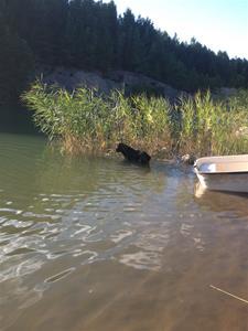 Foto hund och båt