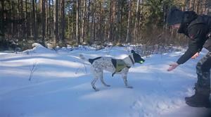 Andy söker i snön