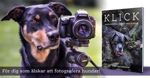 klick hundfotoboken