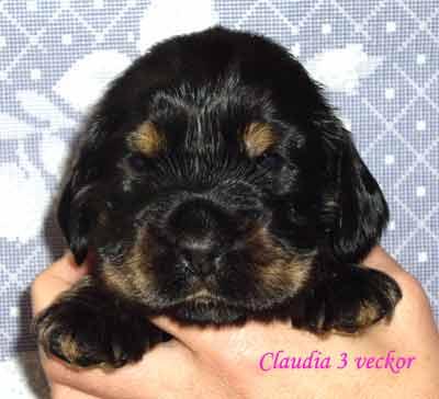 claudia3v
