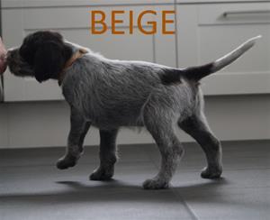 BEIGE1