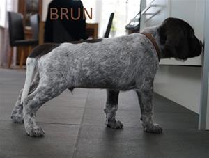 BRUN 1