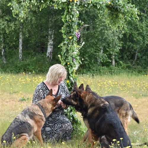 Matte med hundarna