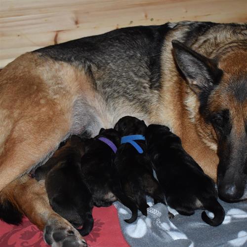 Hela gänget med mamma Nixa, från vänster Brix, Blixtra, Blixten och Brixa