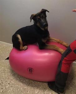 Rindrosens Abazz 6 månader, 29 kg.