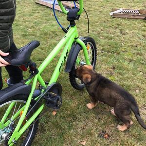 Rindrosens Blixten 6 veckor undersöker cykeln