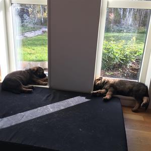 Blixtra och Blixten sover gärna i fönstret - 5 veckor