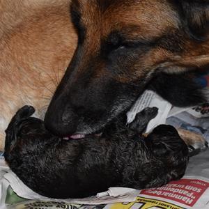 Mamma Nixa med yngsta Brixa som är nyfödd.