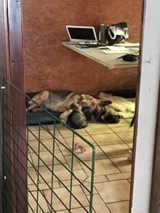 Mamma Nixa vilar med valparna som är 3 veckor gamla