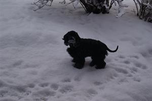 Zally med snö 15 jan-14 004