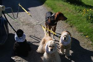 maj 2014 hundar och barnbarn 083