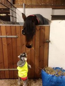 dezzi o hästen