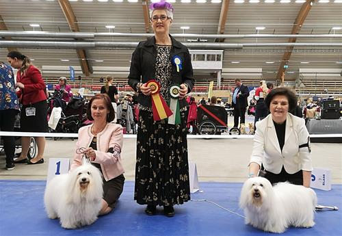 BIR och BIM Svensk vinnare