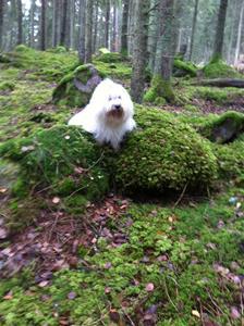 Lennon i skogen