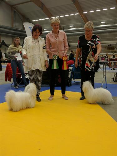 Sundsvall 161015 bir o bim