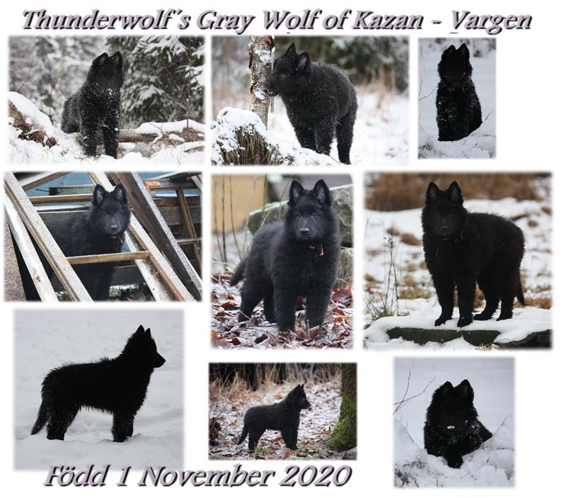 Gray Wolf collage sälj