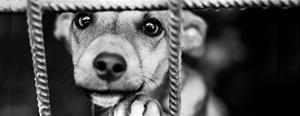 smuggelhund-bakom-galler-topp