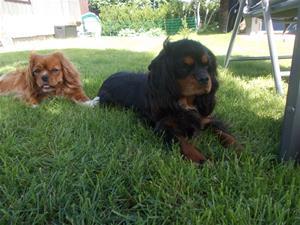 Molly och Sally