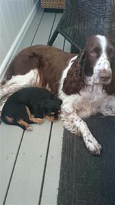 Bertha vilar tryggt med hundkompisen Nova.