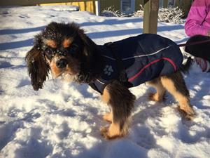 Fina Molle ute i vintervädret :)