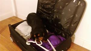 Sally tyckte resväskan var helt ok att ligga i