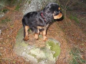 Sally på upptäcksfärd i skogen