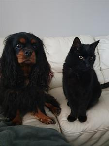 Sally&Figaro