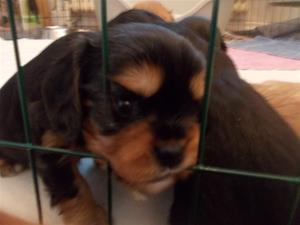 Bertha vill inte sitta bakom galler