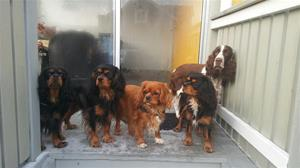 Fr vä, Sally, Blixten, Molly tillsammans med Bertha & Nova