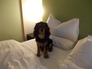 Blixten provar sängen på hotell Arlanda
