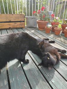 Figaro&Elvis