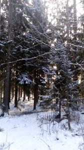 En härlig vintermorgonpromenad :)