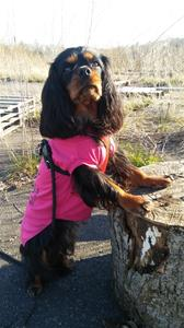 Sally på dogparkourlektion :)