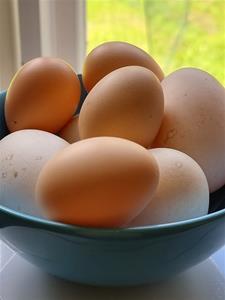 Ägg från våra hedemorahöns och pekingankor